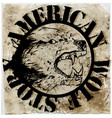 American wolf t shirt graphic design vector image