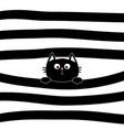 black cat kitten face head holding line vector image