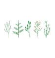 culinary herbs set botanical elements vector image vector image