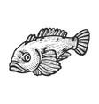 gofish sketch vector image vector image