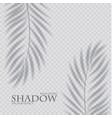 palm leaf shadow transparent effect exotic design vector image
