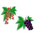 bunches of grapes vector image
