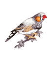 cute little bird sitting on twig over white vector image