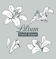 set collection white lilium isolated on grey vector image vector image