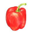 watercolor sweet pepper vector image vector image