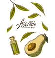 avocado card green template banner organic vector image vector image