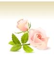 Beautiful pink rose vector image