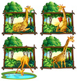 Four frames of giraffes in jungle vector image vector image
