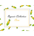 high quality of corn label vector image vector image