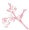 Vintage Cherry Blossom Branch vector image vector image