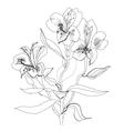 alstrameriya flower sketch vector image vector image