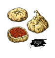 dried fig drawing hand drawn dehydrated vector image vector image