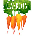 Fresh carrots with text design vector image vector image