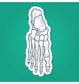 Bones of foot Skeleton part vector image