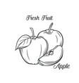 hand drawn apple icon vector image