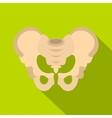 Pelvis icon flat style vector image vector image