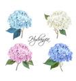 hydrangea realistic set vector image