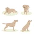 Set Dog Labrador vector image vector image