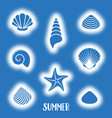 summer card with sea shells vector image vector image