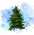 fir tree watercolor isolated on white vector image