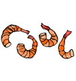 set of cooked shrimps seafood prawn vector image vector image