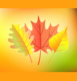 autumn yellow leaves vector image