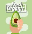 hand holding vegetable fresh organic avocado vector image