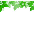 summer or spring leaves banner concept vector image vector image