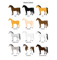 flat collection set horse colors vector image