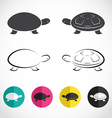 group of turtle vector image