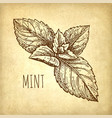 ink sketch mint vector image