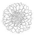 beautiful monochrome black and white dahlia vector image vector image