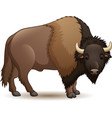 bison isolated on white background vector image vector image