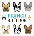 Colorful French Bulldog Collection vector image vector image