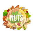 colourful banner with different kinds of nuts vector image vector image