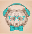 hipster animal bear hand drawing muzzle vector image vector image
