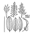 graphic heliconia collection vector image