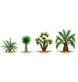 Palm plants vector image vector image