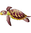 cartoon sea turtle isolated on white background vector image vector image