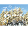 Christmas fir background mesh vector image