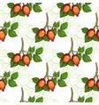 dog-rose seamless pattern vector image