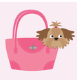 Little glamour tan Shih Tzu dog in the pink bag vector image vector image