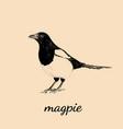 magpie sketch bird magpie vector image vector image