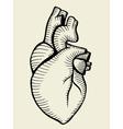 human heart sketch vector image