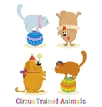 Trained Animal Dog and Cat Set vector image