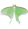 Butterfly Artemis on white vector image vector image