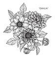 dahlia flower and leaf hand drawn botanical vector image vector image