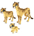 maturation stages leopard animal vector image