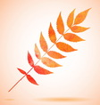 Orange watercolor painted leaf vector image vector image