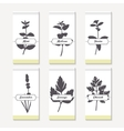 Spicy herbs silhouettes collection Hand drawn vector image